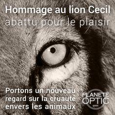 Hommage au lion Cecil abattu pour le plaisir. Portons un nouveau regard sur la cruauté envers les animaux. #CecilTheLion #planeteoptic #cecil #lion #Hwange #Zimbabwe #Afrique #lunettes #glasses #noiretblanc