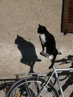 I'm gonna start charging for bike watching! I've got places to go, kitties to see and things to do!