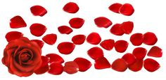Red Rose with Petals PNG Clipart Picture