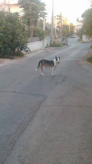 Βρέθηκε σκυλίτσα στην περιοχή του Αγίου Δημητρίου Αττικής χρώματος άσπρο-μαύρο
