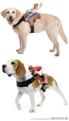 I may be wrong but I think it sort of looks like the dogs like this. funny-dog-riders-action-figures
