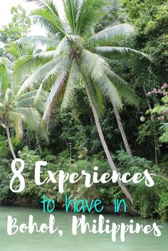 Things you must do when visiting Bohol in the Philippines