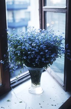 Beautiful Blue Forget-me-nots