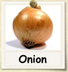 How to Grow Onion | Guide to Growing Onions