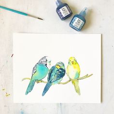 Budgie watercolor family