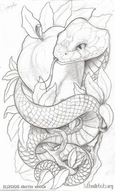 Like the symbolism. Lots of snake and apple tattoos have an angry looking snake. for men ✌ Like the symbolism. Lots of snake and apple tattoos have an angry looking snake. for men ✌ Tattoo Sketches, Tattoo Drawings, Body Art Tattoos, Drawing Sketches, Sleeve Tattoos, Art Drawings, Drawings Of Snakes, Sketch Art, Small Tattoos