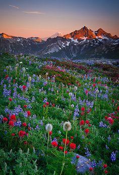 Sea of Color by Bryan Swan, via Flickr