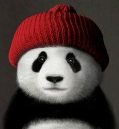 "760 Likes, 16 Comments - Emma(エマ) (@panda_diaries_) on Instagram: ""#panda #instapanda #autumn #pandaexpress #pandacute #pandas #pandabear #daytripping #pandalover…"""