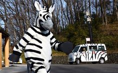 A zoo staff member dressed as a zebra during a drill to practice what to do in the event of an animal escape at the Tama zoo in western suburb of Tokyo on Feb La Fugue, Zebra Painting, Tokyo, Painted Vans, Tigger, Drill, Disney Characters, Fictional Characters, Japanese
