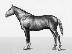 Megrel horse. Лошадь Мегрельской породы, фото