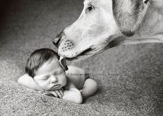 babies and dogs.