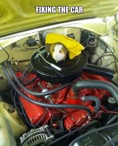 A Guinea Pig fixing the car...
