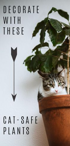 Did you know that some houseplants are toxic to cats and other pets? If you have a furry friend at home be sure to check which plants are safe for cats before bringing a new one home. But don't let this scare you, there are plenty types of houseplants that are safe for cats. Yes, you can decorate your home with plants and keep your cats safe. Check out these 7 easy to grow, cat safe houseplants.