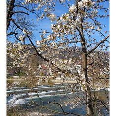 Frühling in Adliswil.  Was für ein wunderschöner Tag.  #lebeninadliswil #livinginadliswil #stadtadliswil #Adliswil #frühling #spring… City Photo, Instagram, Life, Nice Asses