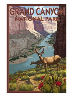 Grand Canyon National Park, Arizona, Deer Scene $9.99 Art And Illustration, Illustrations, Parque Nacional Do Grand Canyon, Vintage National Park Posters, Wpa Posters, Retro Posters, Park Art, Parcs, Vintage Travel Posters