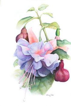 Lavender Fuschia.   Jenny Coker. Watercolor