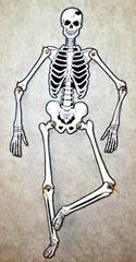 Skelett - Unga Fakta Skeletons, Art, Art Background, Kunst, Gcse Art, Art Education Resources, Skeleton, Artworks