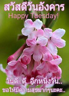 Good Morning Tuesday, Happy Tuesday, Just Saying Hi, Say Hi, Good Day, Flowers, Nice, Quotes, Gun