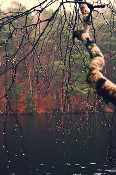 Beautiful Fall Rainy