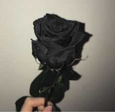 Image uploaded by KindaWeird. Find images and videos about black, flowers and rose on We Heart It - the app to get lost in what you love. Goth Aesthetic, Aesthetic Colors, Aesthetic Photo, Aesthetic Pictures, Black Aesthetic Wallpaper, Black Wallpaper, Aesthetic Wallpapers, Tumblr Roses, Wallpapers Rosa