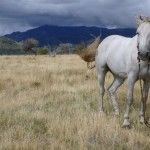 Argentina: horses, mountains, waterfalls, what could be better?