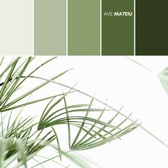 Tropical palm leaves on white background minimal lifestyle concept Color Palette #376 – Ave Mateiu  -  Summer 2020, color palette, color palettes, colour palettes, color scheme, color inspiration, color combination, art tutorial, collage, digital art, canvas painting, wall art, home painting, photography, weddings by color, inspiration, vintage, wallpaper, background, rustic, seasonal, season, natural, nature