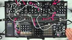Make Noise Black and Gold Shared System