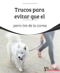 Trucos para evitar que el perro tire de la correa  Evitar que el perro tire de la correa es un tema que desvela a muchos dueños a la hora del paseo. Te contamos algunos trucos para lograrlo. #paseo #perro #trucos #adiestramiento