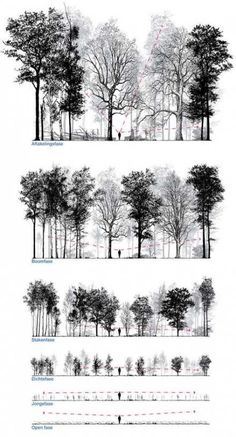 Patrick Ruijzenaars / In imagining and designing forest is frequently talked about the final stage. Equally interesting is the way to get there. It takes many human lives, indeed a lifetime, for them to mature and a young forest is often the least. Architecture Graphics, Architecture Drawings, Landscape Architecture, Landscape Design, Architecture Plan, Fall Landscape, Architecture Portfolio, Affinity Photo, Tree Sketches