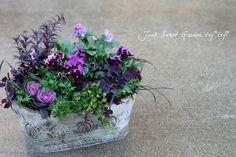 Img_c1c2211105b9ffdde3cd985a81f7dddaaa31aae0 Green Garden, Garden Art, Container Plants, Container Gardening, Pot Plante, Pots, Foliage Plants, Green Flowers, Garden Planters