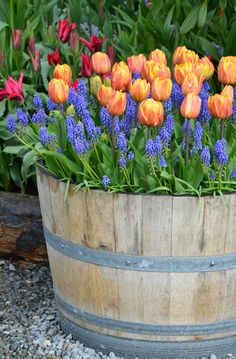 Barrel Garden Planters, Wine Barrel Garden, Whiskey Barrel Planter, Outdoor Planters, Flower Planters, Container Flowers, Container Plants, Container Gardening, Hydroponic Gardening