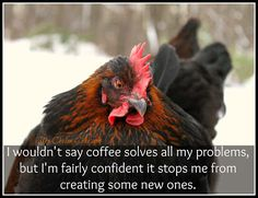 I wouldn't say coffee solves all my problems, but I'm fairly confident it stops me from creating some new ones. ~The Chicken Chick