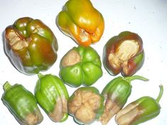 Stuffed Peppers, Vegetables, Quilling, Food, Gardening, Red Peppers, Bedspreads, Stuffed Pepper, Essen
