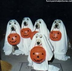 Check out these homemade dog costumes that are so cute! 15 DIY dog costumes that are quick and easy. Your dog will be the hit of the Halloween party! Humour Halloween, Chien Halloween, Homemade Halloween Costumes, Halloween Ghosts, Happy Halloween, Halloween Party, Funny Dog Halloween Costumes, Halloween Decorations, 1960s Halloween