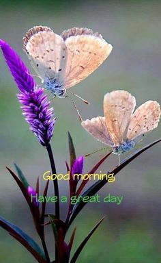 Good Morning beautiful Messages - Romantic Wishes ~ Good morning ina. - Good Morning beautiful Messages – Romantic Wishes ~ Good morning inages - Good Morning Saturday, Morning Morning, Good Morning Flowers, Good Morning Greetings, Good Morning Good Night, Happy Saturday, Morning Board, Morning Texts, Good Morning Wishes