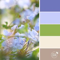 Soothing Hues colour palette from Brand Smoothie to enhance your branding experience