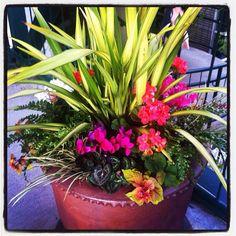The prettiest flower pot arrangement I've ever seen