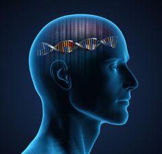 DNA variants linked to schizophrenia, bipolar Theories Of Crime, Dna, Leeds, Usui Reiki, Krill Oil, Stress And Depression, Criminology, Schizophrenia, Genetics