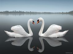 """Together - Detail, by Ben Heine, Flickr. """"I had to walk in the Vistula to take this photo. It is an ode to Love...  The Vistula is the longest and one of the most important rivers in Poland."""""""