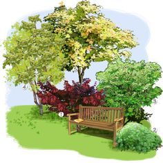 Jardin familial rable amur ce petit arbre ne craint - Le jardin d erables ...