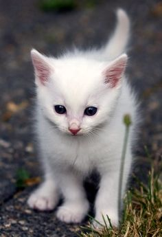 small and cute