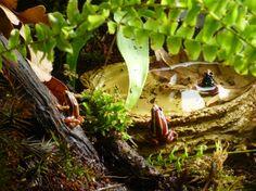 Pfeilgiftfrosch mit Kaulquappen auf dem Rücken