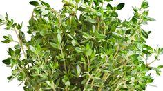Timjami on voimakkaan makuinen ja aromikas yrtti, joka maistuu useimmille ja on tuttu monista ruoista. K-Ruoka.fi:stä löydät timmeimmät timjamireseptit ja käyttövinkit! Plants, Food, Essen, Meals, Plant, Yemek, Eten, Planets