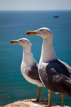 Seagulls at their post Sea Birds, Wild Birds, Beautiful Birds, Animals Beautiful, Animals And Pets, Cute Animals, Afrique Art, Shorebirds, Kinds Of Birds