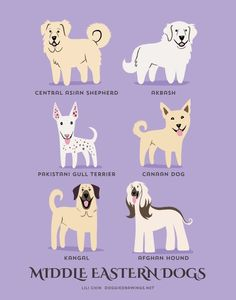 MEDIO orientale cani arte stampa razze di cani di doggiedrawings