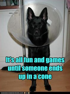 "Too true! - ""It's all fun and games until someone ends up in a cone."" #dog #humor"