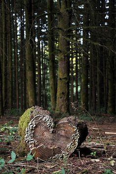 My inspiration, nature is a beautiful thing....heart-shaped tree stump