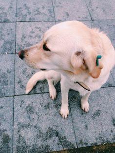 Best friend! Dog ❤️