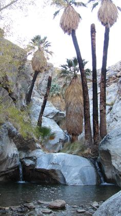 Agua Caliente Indian Canyons (Palm Springs, CA)