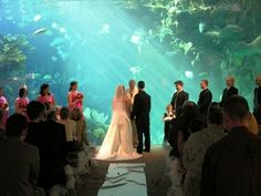 Florida Aquarium? Talk about a fairytale wedding... too bad the real story of the Little Mermaid didn't end well...